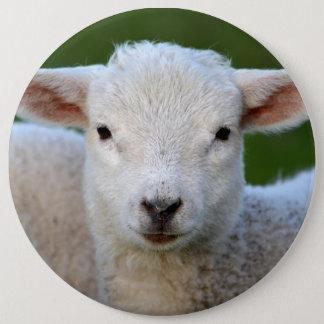 Cute lamb portrait 6 inch round button