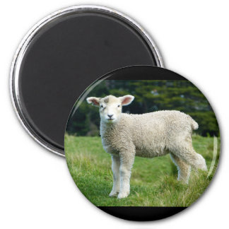 Cute Lamb with Muddy Face in the Meadow 2 Inch Round Magnet