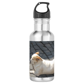 Cute Light Brown Dog 532 Ml Water Bottle