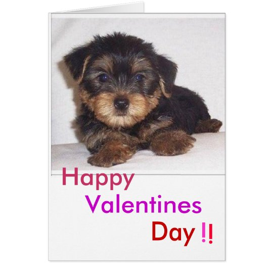 cute lil puppy, Valentines, Day, Happy, !, ! Card