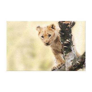 Cute Lion Cub in a Tree Canvas Print