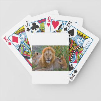 Cute Lion Cub Playing With Dad, Kenya Bicycle Playing Cards