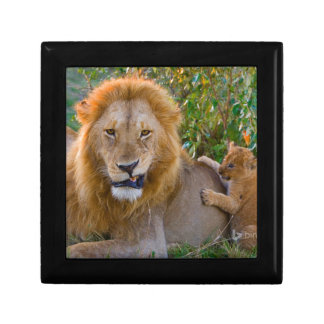 Cute Lion Cub Playing With Dad, Kenya Gift Box