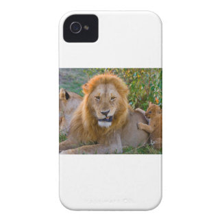 Cute Lion Cub Playing With Dad, Kenya iPhone 4 Cover