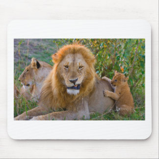 Cute Lion Cub Playing With Dad, Kenya Mouse Pad