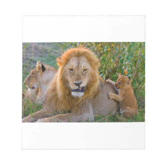 Cute Lion Cub Playing With Dad, Kenya Notepad