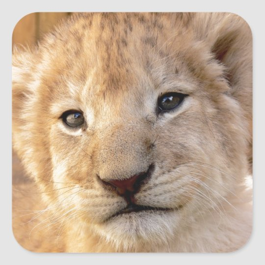 Cute lion cub portrait square sticker