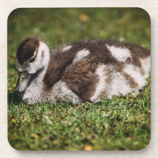 Cute Little Baby Goose, Gosling In Grass Coaster