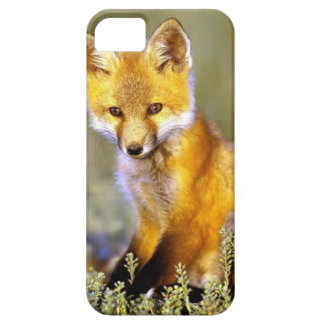 cute little baby red fox case for the iPhone 5