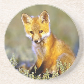 cute little baby red fox coaster