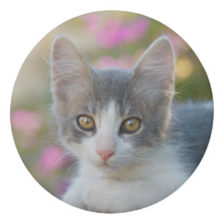 Cute Little Bicolor Kitten Fluffy Photo Cat Lovers Eraser