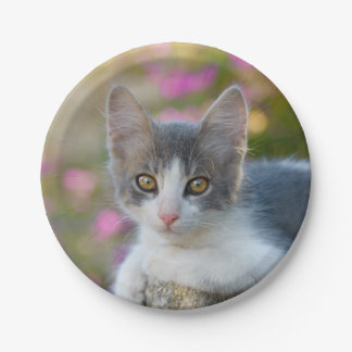Cute Little Bicolor Kitten Fluffy Photo Cat Lovers Paper Plate