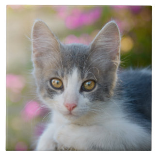 Cute Little Bicolor Kitten Fluffy Photo Cat Lovers Tile