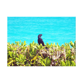 Cute Little Black Bird Canvas Print