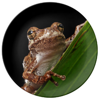 Cute Little Brown Frog Porcelain Plate