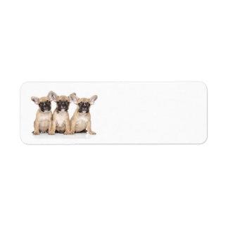 Cute little French Bulldogs Return Address Label
