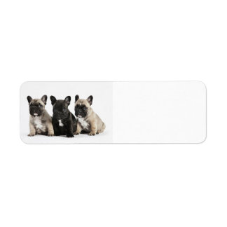 Cute little French Bulldogs Return Address Label