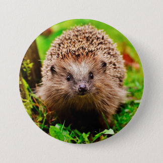 Cute Little Hedgehog in the Forest 3 Inch Round Button
