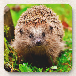 Cute Little Hedgehog in the Forest Coaster