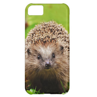 Cute Little Hedgehog in the Forest Cover For iPhone 5C