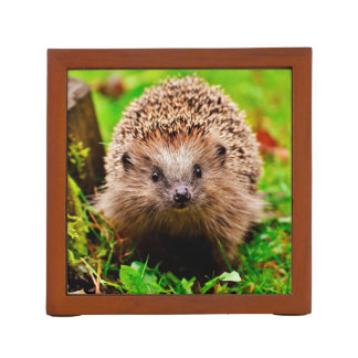 Cute Little Hedgehog in the Forest Desk Organizer