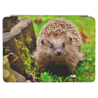 Cute Little Hedgehog in the Forest iPad Air Cover