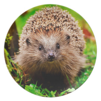 Cute Little Hedgehog in the Forest Plate