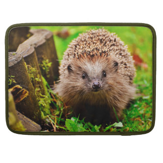 Cute Little Hedgehog in the Forest Sleeve For MacBook Pro