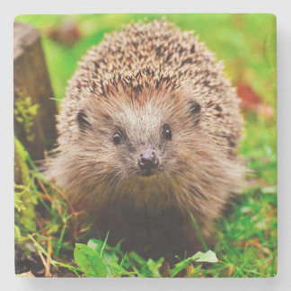 Cute Little Hedgehog in the Forest Stone Coaster