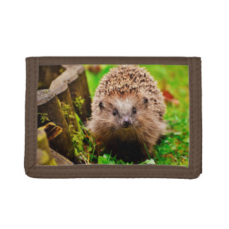 Cute Little Hedgehog in the Forest Trifold Wallets
