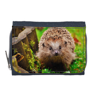Cute Little Hedgehog in the Forest Wallet