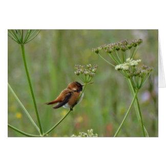 Cute little Hummingbird Card
