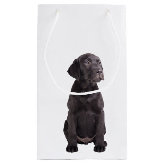 cute little labrador retriever puppy small gift bag