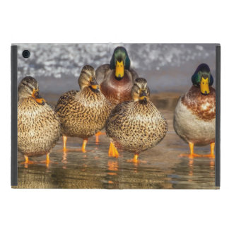 Cute Little Mallard Ducks iPad Mini Cover