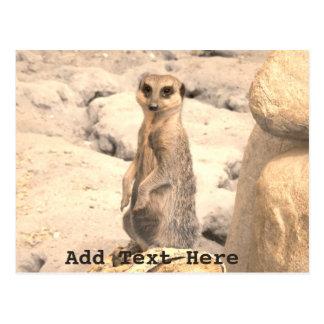 Cute Little Meerkat on Guard Postcard