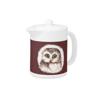 Cute Little Owl Watercolor Bird, Animal