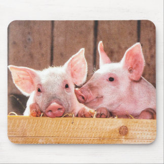Cute Little Pigs Mouse Pad