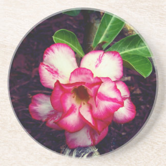 Cute Little Pink Flower Coaster