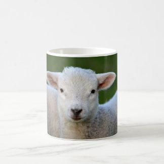 Cute little Sheep Coffee Mug