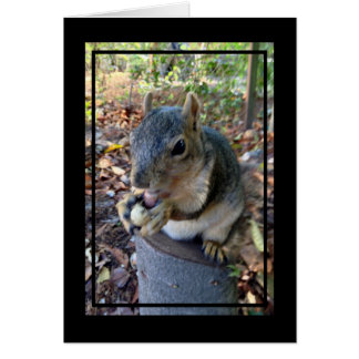Cute Little Squirrel Eating a Peanut on a Stump Stationery Note Card