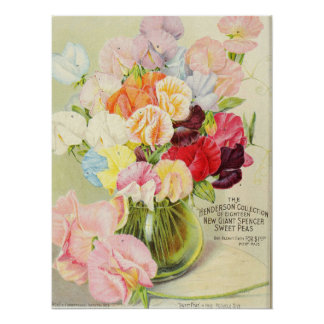 Cute Little Sweet Peas Poster