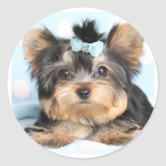 Cute Little Tiny Yorkie Pup design Classic Round Sticker