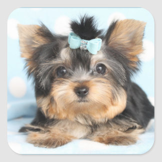 Cute Little Tiny Yorkie Pup design Square Sticker