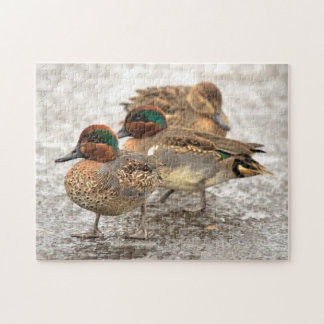 Cute Little Trio of Green-Winged Teals Jigsaw Puzzle