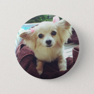 Cute Long-Haired Chihuahua 2 Inch Round Button
