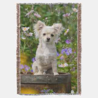 Cute long-haired cream Chihuahua Dog Puppy - soft Throw Blanket