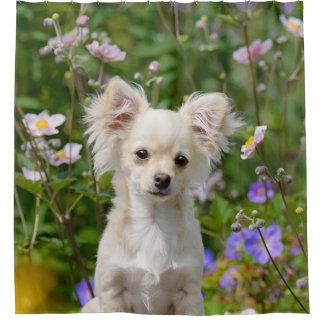 Cute longhair Chihuahua Dog Puppy Pet Photo - Tub
