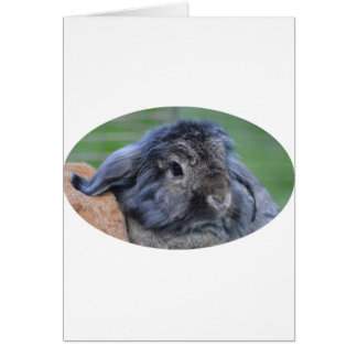 Cute lop eared rabbit card