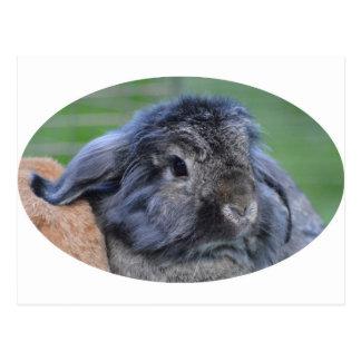 Cute lop eared rabbit postcard