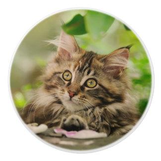 Cute Maine Coon Cat Kitten Portrait - Decorative Ceramic Knob